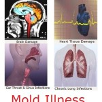 How Did I Get Sick With Mold Illness?